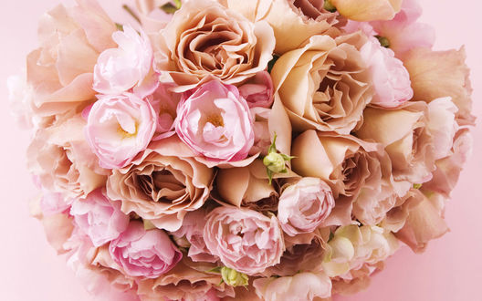 нежно-кремовые свадебные розы  № 1323043 загрузить