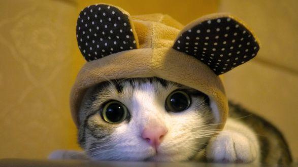 Обои Котенок в шапке с ушками