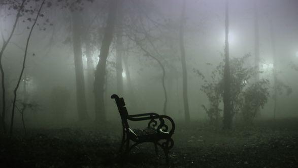 Обои Скамейка в туманном парке