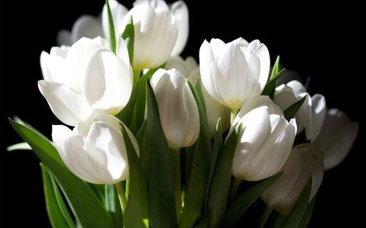 Обои Букет белых тюльпанов на черном фоне
