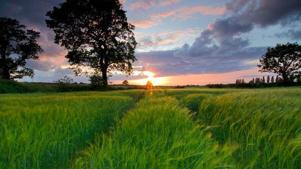Обои Зеленое поле на фоне заката