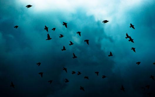 видно фото к чему снится стая птиц над головой нас