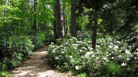 Обои Уникальный ботанический сад Арборетум Мустала / Arboretum MustiIa, находящийся в Финляндии / Finland