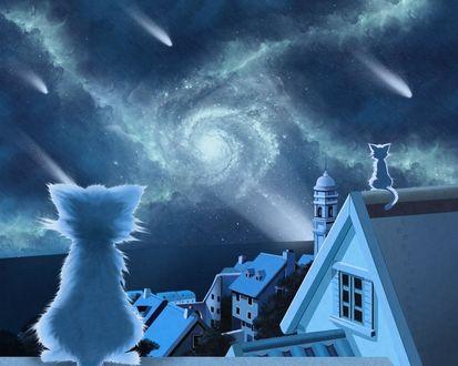 Обои Кошки сидят на крышах домов и смотрят на фантастический звездопад