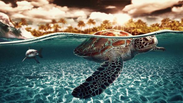 Обои Черепаха под водой, на заднем плане плывет акула