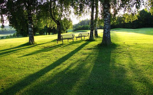 Обои Две скамейки на поляне с растущими березами в солнечных лучах