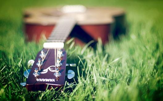 Обои Гитара Yamaxa лежит в траве