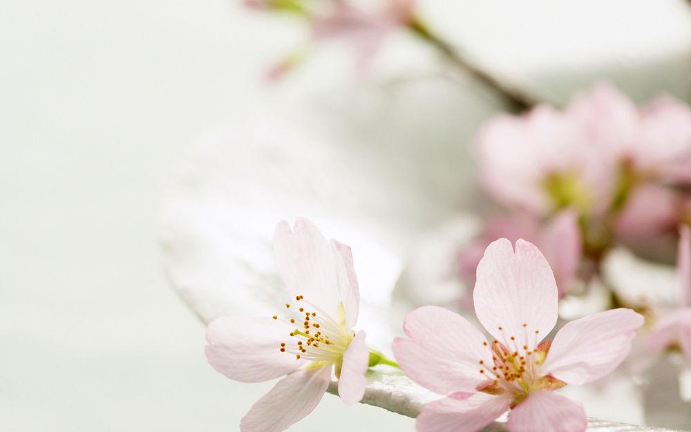 Светлые цветы картинки