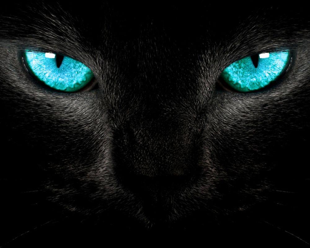 Глаза черного кота картинки