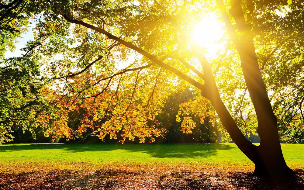 Солнце ярко светит скачать бесплатно mp3