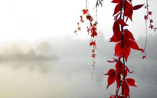 Обои Туманное озеро и красные листья