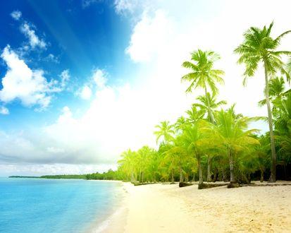 Обои Прибрежные пальмы, залитые солнечным светом