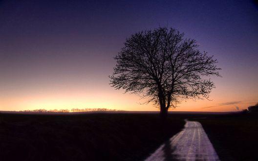 Обои Голое дерево рядом с асфальтированной дорогой, уходящей в закат