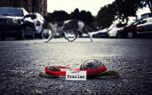 Обои На дороге две улитки: большая и маленькая, перевязанные красной лентой, ползут в разные стороны, позади видна кошка, переходящая дорогу, и автомобили, эффект боке (Trailer / Прицеп)
