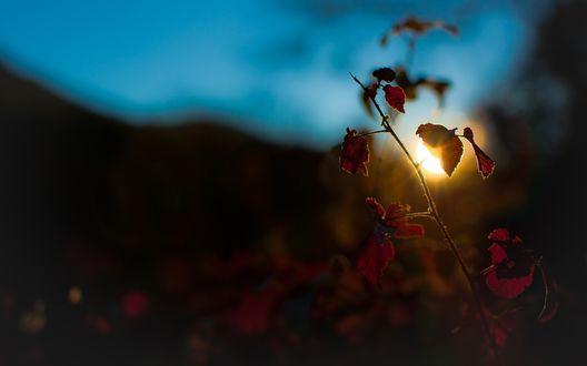 Обои Ветка с листьями на фоне заходящего солнца за горы, и голубого неба