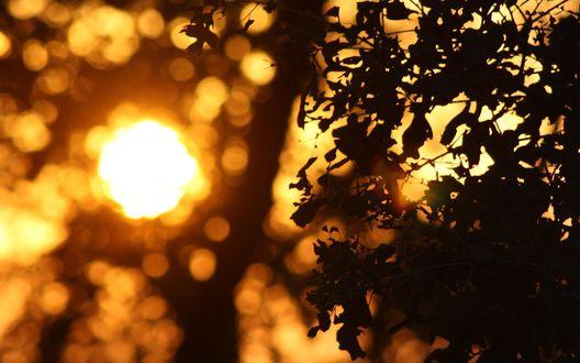солнечные блики обои для рабочего стола № 648653 бесплатно