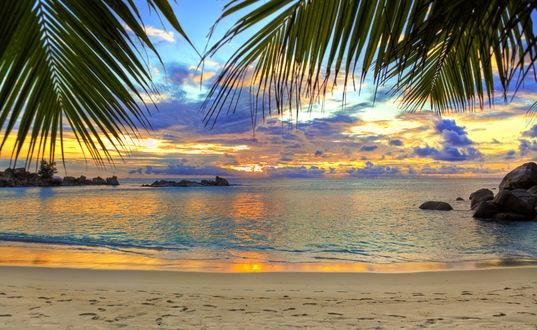 Обои Вид на море сквозь листья пальмы