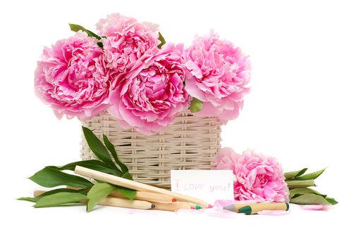 Обои Крупные пионы в плетеной корзинке из светлой лозы, рядом лежат разноцветные карандаши и напдпись на карточке I love you / Я тебя люблю
