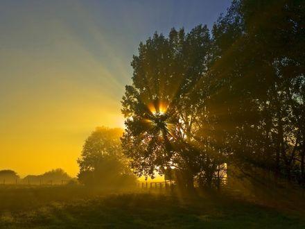 Обои Утренние солнечные лучи пробиваются сквозь крону дерева