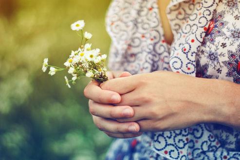Обои Скромный букетик полевых ромашек в руках девушки