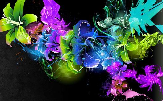 Обои Разноцветные лилии на черном фоне