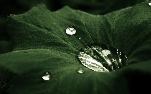 Обои Капельки воды на ярко-зеленом листочке