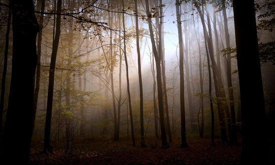 Обои Солнечный свет проникает сквозь листву в туманном осеннем лесу