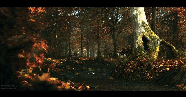 Обои Осенний лес, художник Marek Denko / Марек Денко