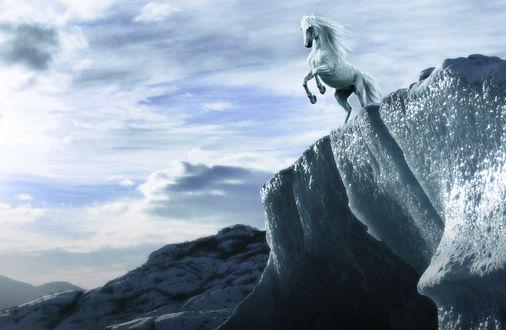 Обои Вставший на дыбы белый конь, на краю горы