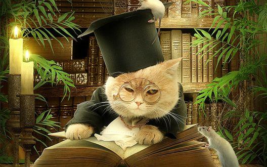Обои Рыжий кот, одетый в черную мантию и шапочку-конфедератку, на которой сидит белая мышь, с пенсне на носу листает толстую книгу на фоне горящих свечей, книг, стоящих на полках, комнатных зеленых растений и любопытной белой мыши