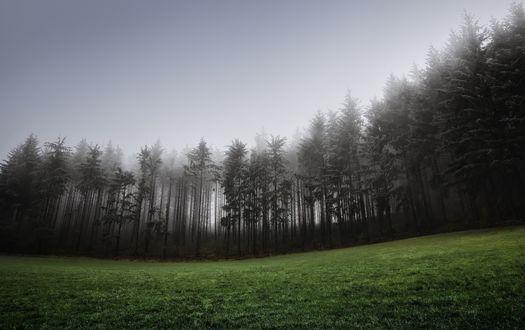 Обои Туманная опушка леса