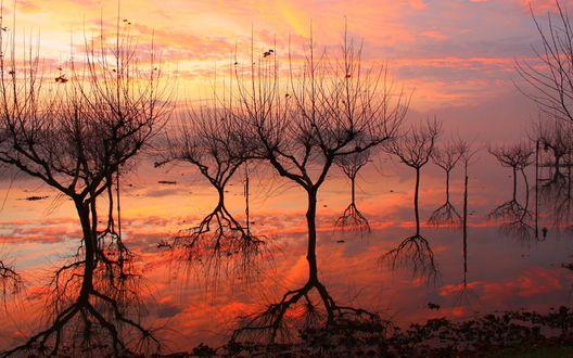 Обои Силуэты голых деревьев отражаются в воде на фоне заката