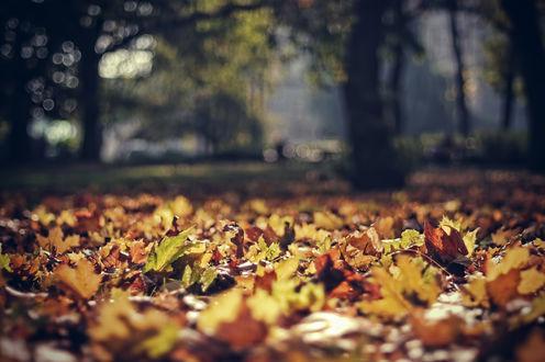 Обои Желтые листья в траве, макросъемка