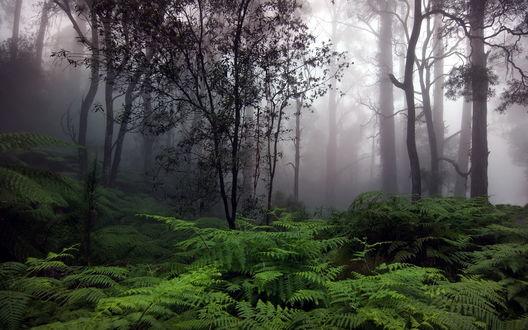 Обои Густые кусты зеленого папоротника, растущего на опушке леса, находящегося в туманной дымке