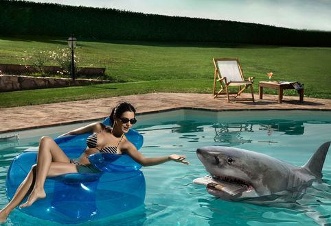 Обои Акула подносит газету девушке отдыхающей в бассейне
