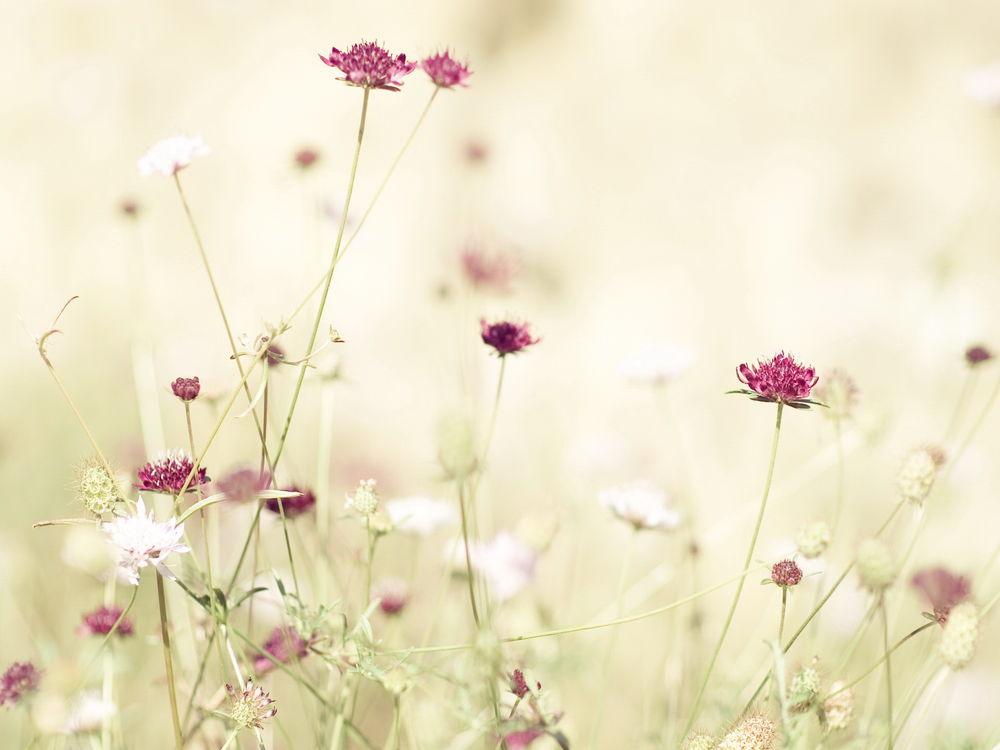 Весна минимализм обои на рабочий стол