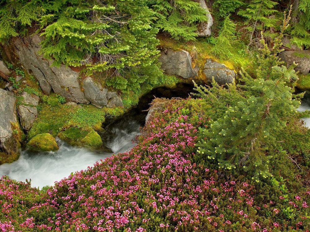 1200 400, картинка с водопадом и поляной цветов