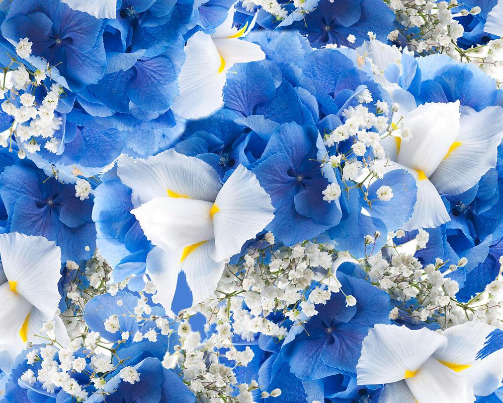 Обои синие, цветы. Цветы foto 12