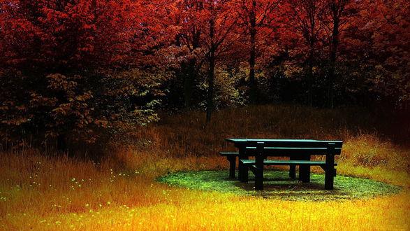 Обои Стол с лавочками на зеленой поляне, вокруг пожелтевшая трава и деревья с красными листьями