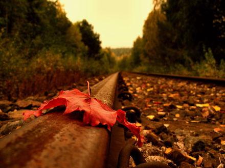 Обои Осенний кленовый лист лежит на рельсах, которые проходят через лес