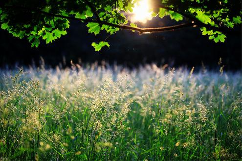 Обои Высокая трава в вечерних солнечных лучах