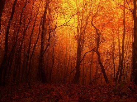 Обои Осенний лес в оранжевой дымке