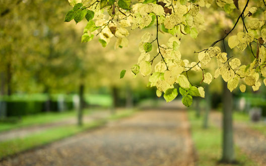 Обои Ветка дерева, на фоне которой в даль уходит тротуар