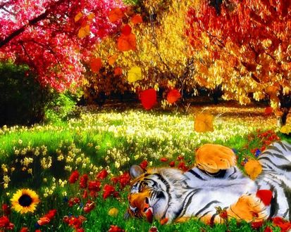 Обои Тигр валяется на поляне с цветами под деревом