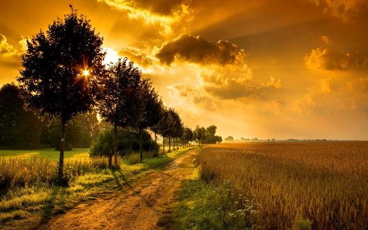 Обои Грунтовая дорога, идущая вдоль пшеничного поля с поспевшими колосьями на фоне утреннего восходящего солнца на небе с темными тучами