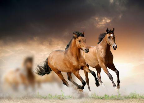 Обои Кони скачут галопом на фоне неба