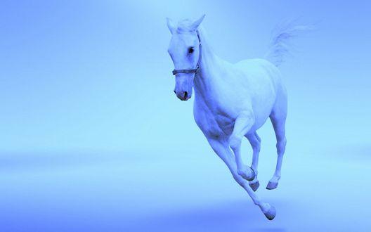 Обои Белый конь скачет на бело-голубом фоне