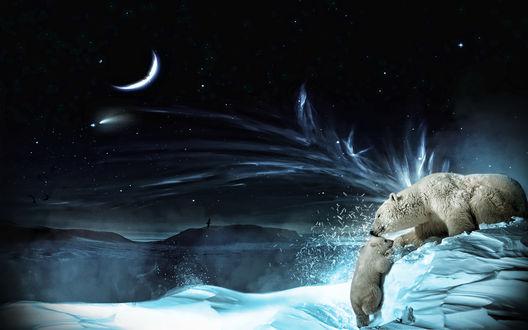 Обои На фоне звездного неба, белый медвежонок карабкается к маме медведице