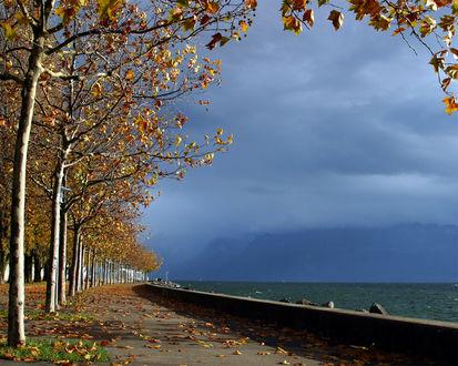 Обои Проходящая дорога рядом с деревьями и морем