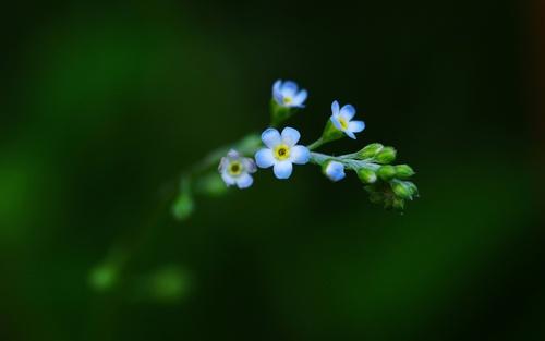 нежный цветок картинка: